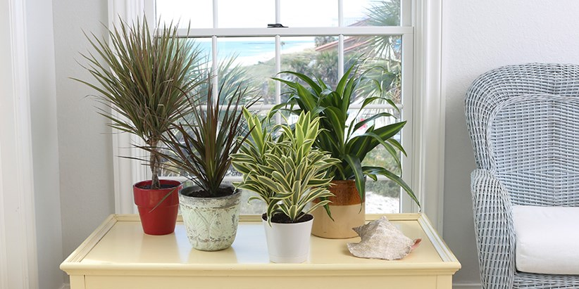 Costa Farms Shares Tips for Choosing Foliage Plants