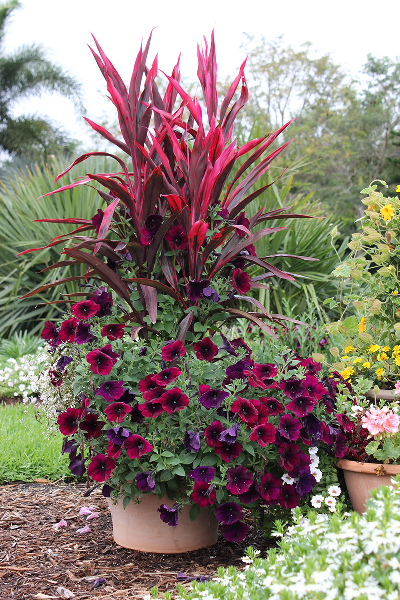 Flowers plants container gardening on pinterest container garden container gardening and - Flowers for container gardening ...